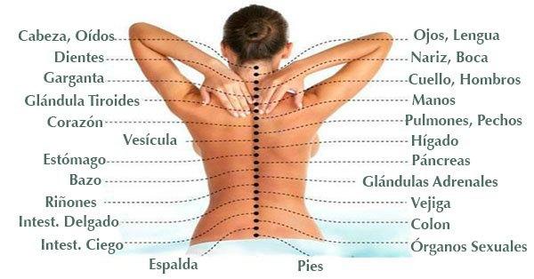 Puede una espina dorsal dañada afectar tus órganos internos ...