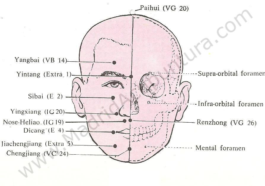 Puntos motores acupuntura